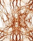 Sistema humano del nervio ilustración del vector