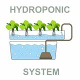 Sistema idroponico - Chlorophytum Immagini Stock