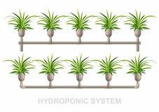 Sistema idroponico - Chlorophytum Fotografie Stock