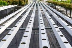 Sistema idroponico organico della piantagione delle verdure nella coltura idroponica f Immagine Stock Libera da Diritti