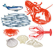 Sistema ilustrado de mariscos Imagen de archivo libre de regalías