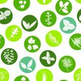 Sistema inconsútil del modelo del icono grande de las siluetas blancas de las hierbas culinarias populares en círculos de color F Fotografía de archivo libre de regalías