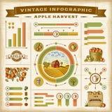 Sistema infographic de la cosecha de la manzana del vintage ilustración del vector