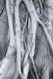 Sistema intrincado de la raíz Imagenes de archivo