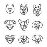 Sistema linear del icono de las razas de los perros Perro de Pomerania de Pomeranian, barro amasado, perro esquimal, perro basset Stock de ilustración