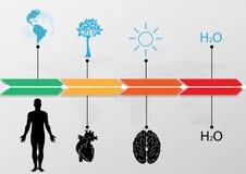Sistema médico de Infographic, cronología infographic del mundo Ilustración libre illustration
