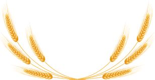 Sistema maduro del trigo de los oídos Plantilla detallada aislada Imagen de archivo