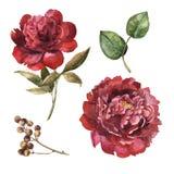 Sistema marrón de la flor de la acuarela libre illustration
