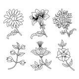 Sistema negro del esquema de las ramas de la flor Fotografía de archivo libre de regalías