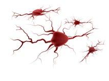 Sistema nervioso fotografía de archivo