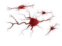 Sistema nervoso Fotografia Stock