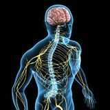 Sistema nervoso Foto de Stock Royalty Free