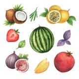 Sistema orgánico de la acuarela de frutas y de hierbas aisladas en el fondo blanco libre illustration