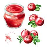Sistema orgánico del atasco de la fruta Tarro de cristal de mermelada del arándano y de frutas frescas aisladas en el fondo blanc Fotos de archivo