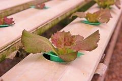 sistema para la cultura vegetal hidropónica en la evaporación del agua del invernadero imágenes de archivo libres de regalías
