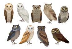 Sistema plano del vector de diversa especie de búhos Pájaros salvajes del bosque Criaturas que vuelan Elementos para el libro de  ilustración del vector