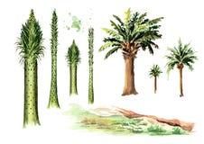 Sistema prehistórico del árbol Ejemplo dibujado mano de la acuarela, aislado en el fondo blanco stock de ilustración