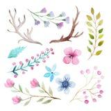Sistema rústico de la acuarela de flores y de hojas Foto de archivo libre de regalías