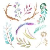 Sistema rústico de la acuarela de flores y de hojas Imágenes de archivo libres de regalías