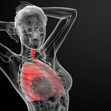 Sistema respiratorio Fotos de archivo