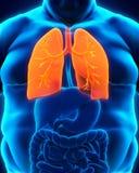 Sistema respiratorio de cuerpo gordo Imagenes de archivo