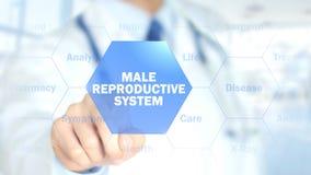 Sistema riproduttivo maschio, medico che lavora all'interfaccia olografica, moto fotografie stock libere da diritti