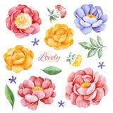Sistema romántico pintado a mano con las peonías, las flores, las rosas y las hojas de la acuarela libre illustration