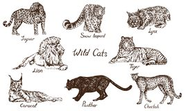 Sistema salvaje de los gatos: Jaguar, onza del Snow Leopard, lince del lince, león, tigre, rooikat de Caracal, lince persa, pante stock de ilustración