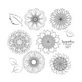 Sistema simétrico floral de las flores del verano Flor dibujada mano del garabato Ejemplo del vector del esquema en el fondo blan stock de ilustración