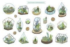 Sistema suculento del cactus ilustración del vector