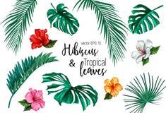 Sistema tropical del hibisco de la palma del monstera de la hoja del vector foto de archivo