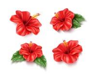 Sistema tropical realista de la flor del hibisco rojo del vector imágenes de archivo libres de regalías