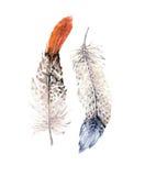 Sistema vibrante dibujado mano de la pluma de las pinturas de la acuarela Alas del estilo de Boho Ilustración aislada en blanco D Fotografía de archivo libre de regalías