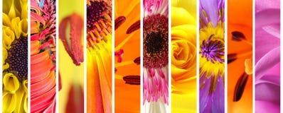 Sistema vivo de la colección de las flores Fotografía de archivo libre de regalías
