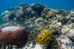 Sistema vivo do recife de corais Fotografia de Stock