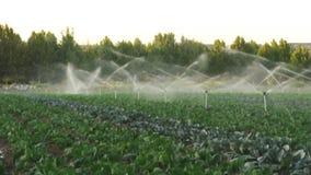 Sistemas de irrigação em um jardim vegetal verde video estoque