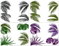 Sistemas de las hojas coloridas de palmeras tropicales Monstruo, agavo Aislado en el fondo blanco Ilustración Imagen de archivo libre de regalías