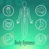 Sistemas do corpo humano Imagem de Stock