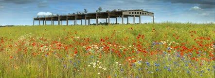 Sistemi con i fiori sboccianti e la costruzione abbandonata dell'agricoltura immagine stock