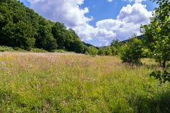 Sistemi con la fioritura fiori gialli e porpora sotto il cielo blu con le nuvole bianche Immagini Stock