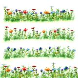 Sistemi i fiori nell'erba verde dell'estate su verde porpora giallo blu rosso luminoso franco della pittura dell'acquerello della Fotografie Stock Libere da Diritti