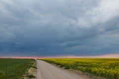 Sistemi il giallo verde contro un fondo delle nuvole temporalesche Fotografie Stock Libere da Diritti