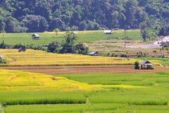 Sistemi il riso e la capanna, buon paesaggio in Tailandia. Immagine Stock