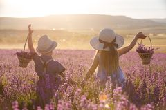 Brother and sister in lavender field. Sister with brother walking in lavender field royalty free stock photo
