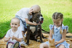 Sister and brothers playing with Staffordshire Terrier Stock Photo