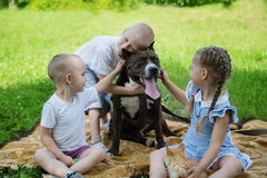 Sister and brothers playing with Staffordshire Terrier Royalty Free Stock Photography