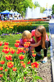 Sister teaches the younger to smell tulips on the city flowerbed Royalty Free Stock Image