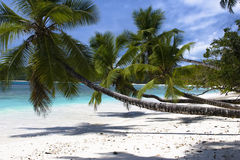 Sisters. Palm-trees on the beach of Mahe island, Seychelles stock image