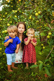 Sisters and brother in the garden. Pretty teen girl with little sister and brother resting in the garden near the apple tree Stock Photo
