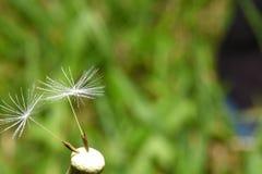 3sisters en fleur simple images stock